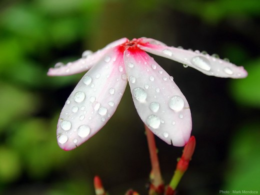 morning dew photography